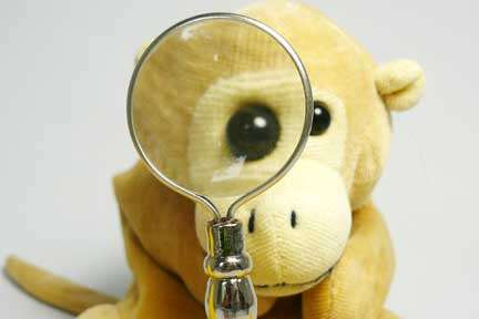 Monkey is looking for clues.